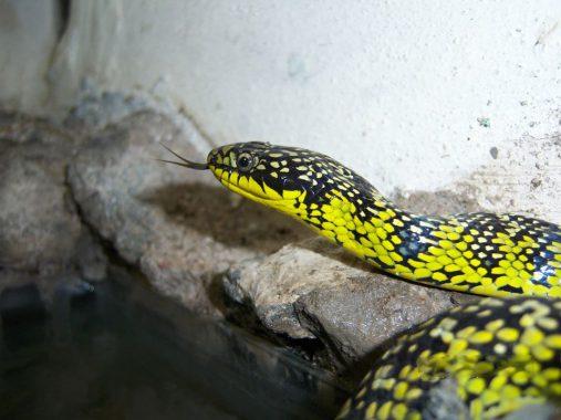 serpentario12