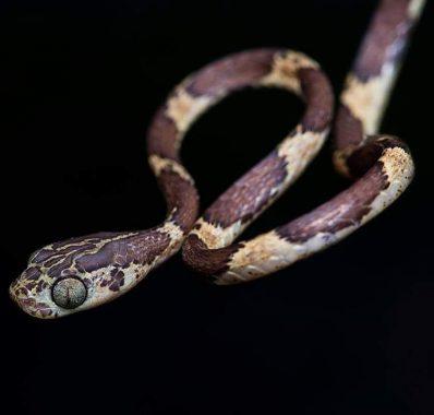 serpentario2