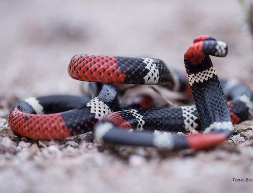 serpentario7